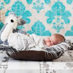 Baby Newborn Portrait Photography Wales